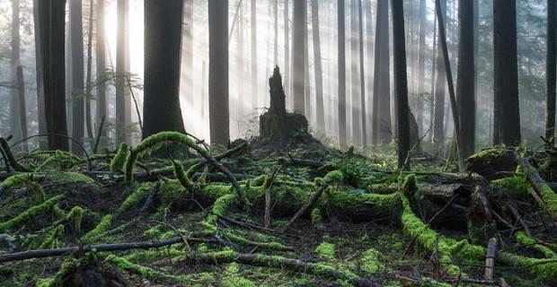 Лучшие книги про лес - добрые и страшные