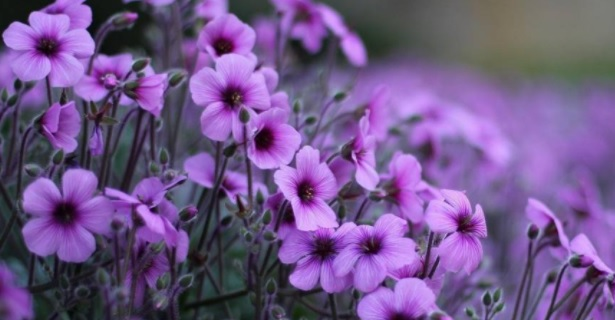 Лучшие книги про цветы и растения