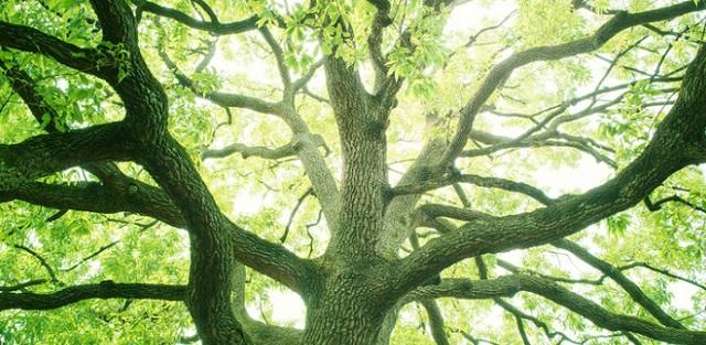 Подборка книг про деревья